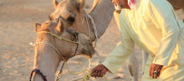 camel trekking oman